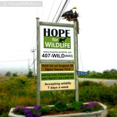 When we said we were going to visit Nova Scotia during our vacation, my mother-in-law told us about this great TV show she had been watching: Hope For Wildlife. Visit Nova Scotia, Winning The Lottery, Great Tv Shows, Learning Centers, Life Goals, Open House, Places To See, Maps, Things To Do