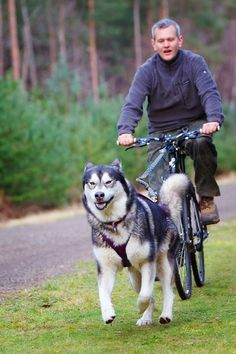 A starter kit including everything you need to get started bikejoring with either 1 or 2 dogs. Bikejor is the sport of running your dog on your bike and is another great way to get out and exercise your dog.
