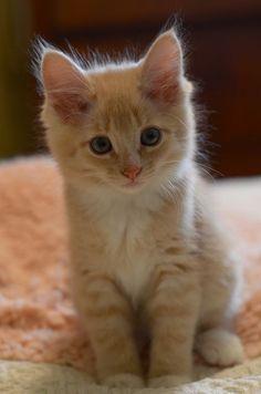 adorable #kittens