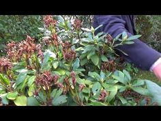 Youtube, Plants, Gardening, Lawn And Garden, Plant, Youtubers, Planting, Yard Landscaping, Planets