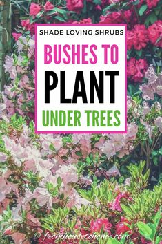Shade Loving Shrubs: 11 Beautiful Bushes To Plant Under Trees - Gardening @ From House To Home - This list of shrubs is perfect for my shade garden. I wasn't sure how to fill in the garden bed a - Shade Loving Shrubs, Shade Shrubs, Shade Garden Plants, Garden Shrubs, Shade Perennials, Garden Trees, Planters For Shade, Shaded Garden, Fruit Garden
