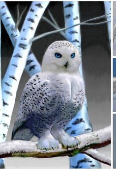 Stunning white snow owl