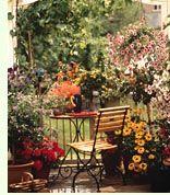 Ambientacion Plantas de Interior