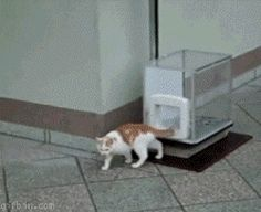 Cat Elevator...Really?