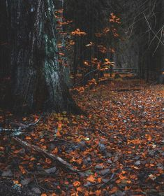 """lsleofskye: """"forest path"""" - Travel and Extra Autumn Cozy, Autumn Forest, Dark Autumn, Autumn Feeling, Autumn Witch, Forest Path, The Forest, Forest Floor, Autumn Photography"""