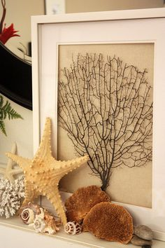 Coastal living  mantel-- like framed seaweed  other items from the sea. Adds texture  interest