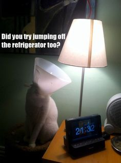 Lolcats - Lolcats n' Funny Cat Pictures - funny cat pictures - Cheezburger