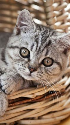 Adorable kitten in a basket.