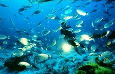 Diving in Med. Sea
