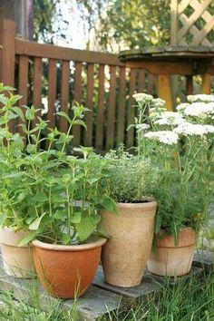 Kräuter Pflanzen | Pflanzen | Pinterest | Garten Und Selber Machen Krauter Pflanzen Topf Anbauen