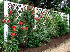 fence trellis made of lattice