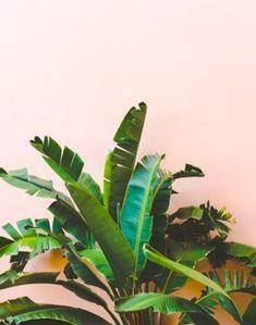 Pink + Green Interior - TRINE'S WARDROBE