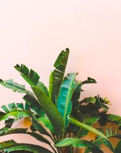pinkgreen11