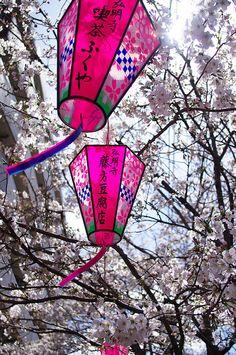Lanterns and sakura Japanese Culture, Japanese Art, Japanese Things, Japanese Garden Plants, Sea Of Japan, Turning Japanese, Vintage Lanterns, Sakura, Chinese Lanterns