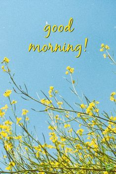 Good morning wish on picture with yellow spring time wild flowers. Good Morning Beautiful People, Good Morning Funny, Happy Morning, Good Morning Picture, Good Morning Flowers, Good Morning Good Night, Good Morning Images, Morning Greetings Quotes, Morning Messages
