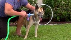 ตูบเลิฟเลย!! จับสุนัขอาบน้ำแบบใหม่ด้วยสิ่งนี้? ไม่เจ็บตัวแถมสะอาดสุดๆ! (ชมคลิป) | สำนักข่าวทีนิวส์