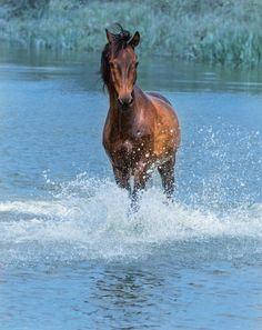 horse by Victoriya Bondarenko Majestic Horse, Beautiful Horses, Riding Quotes, Horse Facts, Morgan Horse, Horse Pictures, Horse Love, Wild Horses, Horse Riding