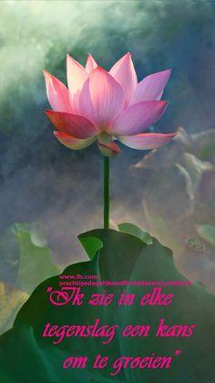 26 best waterlelies images on pinterest lotus flower good waterlelie zuiverheid van hart live laugh love mightylinksfo