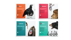 Chester Zoo Rebrand on Behance