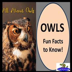Owls PowerPoint - Fun Facts About Owls by HappyEdugator | Teachers Pay Teachers