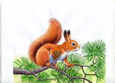 Сообщество иллюстраторов | Иллюстрация Михаил - Белка. Классика. Акварель