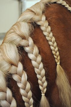 30 Amazing Horse Tail Braids Ideas to make Your Friends Jealous - Tail and Fur All The Pretty Horses, Beautiful Horses, Animals Beautiful, Beautiful Braids, Horse Hair Braiding, Horse Mane Braids, Horse Tail, Tail Braids, Horse Grooming