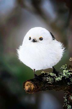 Sweet, tiny white bird on a fir tree