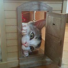 """Excuse me, dollhouse residents. Do you have any tuna I can borrow?"""