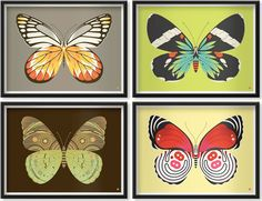 Butterfly & moth series at Tiny Showcase