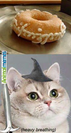 Cat memes Tasty ring...