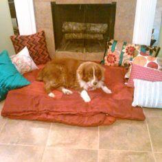 Sheba posing by the fireplace