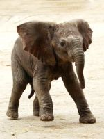 You'll Cheer For This Baby Elephant Trying To Take Its First Steps #refinery29