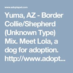 Yuma, AZ - Border Collie/Shepherd (Unknown Type) Mix. Meet Lola, a dog for adoption. http://www.adoptapet.com/pet/17887284-yuma-arizona-border-collie-mix