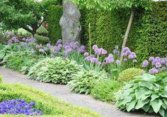 De lila bollarna från jättelöken Allium fungerar avskräckande på sork.