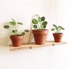 Tout savoir sur Le Pilea Peperomioides / Sweety Oxalis Plants Are Friends, Cafe Bar, Indoor Garden, Decoration, Planter Pots, Instagram Posts, Photo Instagram, Green, Gardens