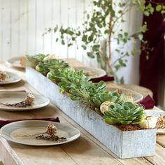 Galvanized Trough Planter in House+Home HOME DÉCOR Room Accents Trays+Bowls at Terrain