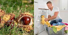 Tvättnötter av kastanj – så gör du | Land Soap Nuts, Bra Hacks, Good To Know, Coconut, Cleaning, Fruit, Land, Bra Tips, Diy