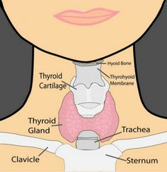 In the USA, the statistics show that 1 in 8 women have thyroid gland problems and half of them don't know about this. Hypothyroidism (when gland activity slows down) represents 90% of thyroid disorders cases. Thyroid functioning is closely connected with the whole body, and if the thyroid is not functioning normally, you will not …