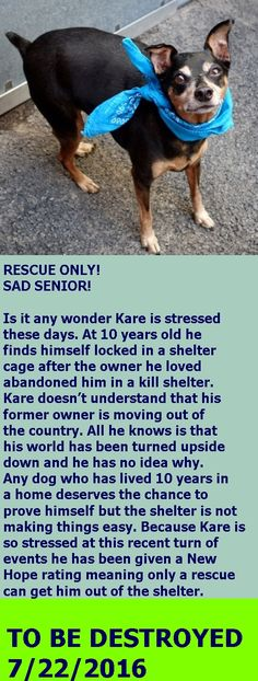 SAFE❤️❤️ 7/24/16 SUPER URGENT Manhattan Center KARE – A1081831 NEUTERED MALE, BLACK / TAN, MIN PINSCHER MIX, 10 yrs OWNER SUR – EVALUATE, NO HOLD Reason MOVE2PRIVA Intake condition GERIATRIC Intake Date 07/19/2016 http://nycdogs.urgentpodr.org/kare-a1081831/