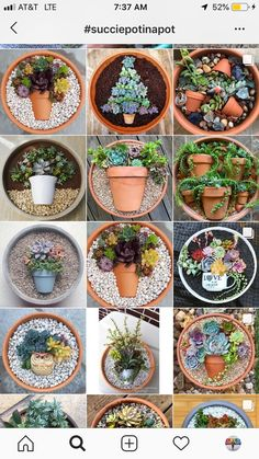 Obsessed with this new succulent trend – succulent garden diy How To Water Succulents, Cacti And Succulents, Planting Succulents, Planting Flowers, Propagate Succulents, Cactus Plants, Air Plants, Succulents Wallpaper, Succulents Drawing