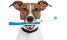 Cepillar dientes al perro