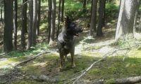 Bella- výlet do přírodní rezervace Strádovské Peklo
