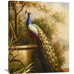 "Global Gallery 'Regal Peacock' by Blum Painting Print on Wrapped Canvas Size: 36"" H x 29.88"" W x 1.5"" D"
