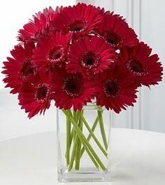 The easisest Centerpeice! Burgundy Flowers, Red Flowers, Red Flower Arrangements, Gerbera Daisy Bouquet, Daisy Centerpieces, Valentine Bouquet, Gerber Daisies, Our Wedding, Wedding Ideas