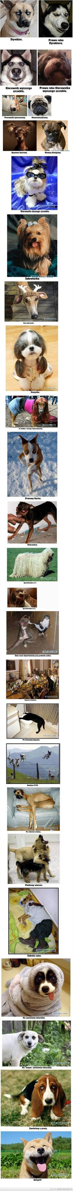 Korporacja w psim wydaniu Cute Cats And Dogs, Animals And Pets, Funny Animals, Cute Animals, Really Funny Pictures, Funny Photos, Wtf Funny, Funny Cute, Weekend Humor
