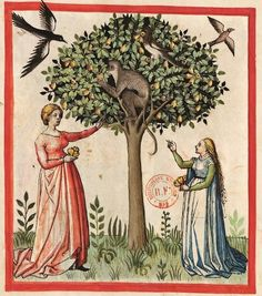 Tacuinum Sanitatis, ca. 1400 Pears
