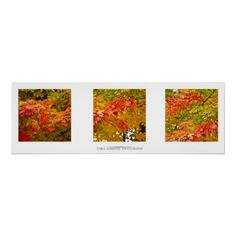 Fall Maple Triptych!   Under $40!