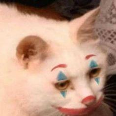 Cute Cats, Funny Cats, Funny Animals, Cute Animals, Meme Chat, Cat Memes, Funny Memes, Meme Meme, Animal Jokes