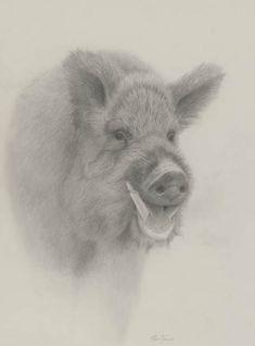 Renso Tamse - 'Wild Boar'