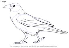 Learn How to Draw a Crow (Birds) Step by Step : Drawing Tutorials